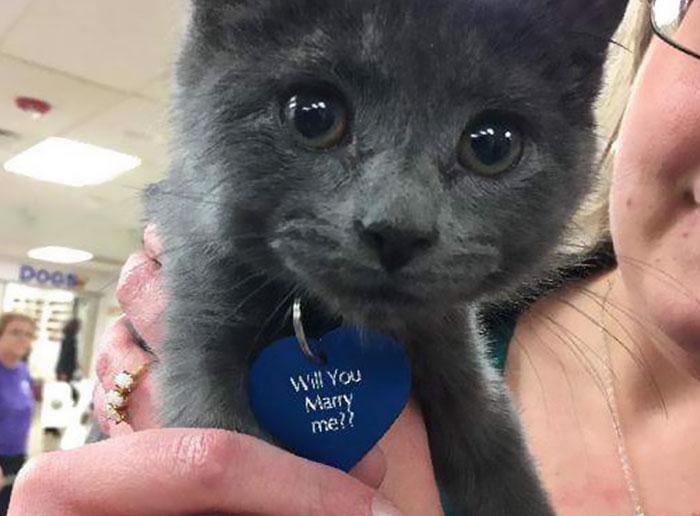 1544193759-8103-girlfriend-tiny-rescue-cat-8.jpg (700×516)